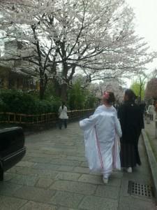 京都前撮り 桜シーズン