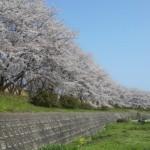 しょうざんリゾート京都 前撮り