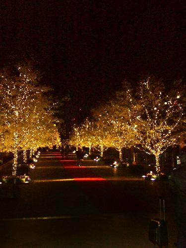 京都北山 クリスマス