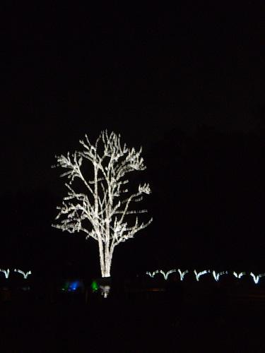 京都府立植物園 イルミネーション