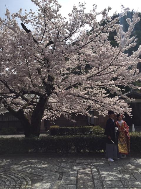 /home/users/0/kilo.jp topwedding/web/blog/wp content/uploads/wedding 160409 img 2394